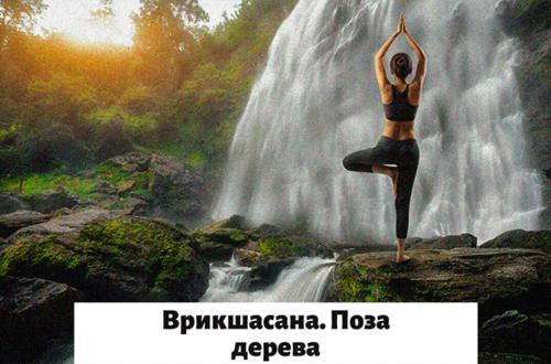 Поза дерева в йоге
